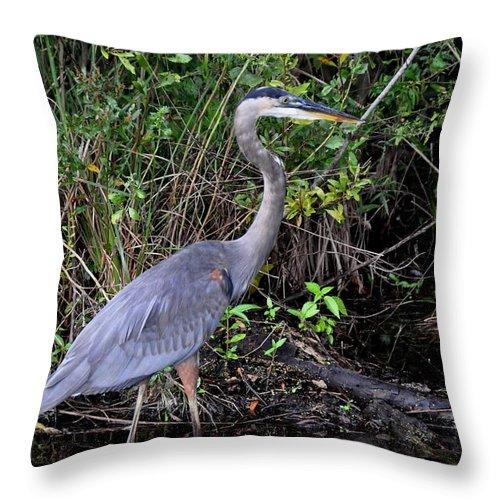 Heron Throw Pillow featuring the photograph Blue Heron by John Black