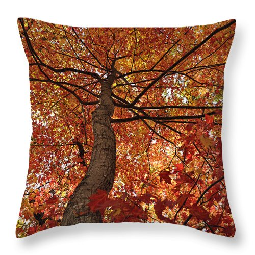 Leaves Throw Pillow featuring the photograph Blue Ridge Autumn Leaves 1.3 by Bruce Gourley