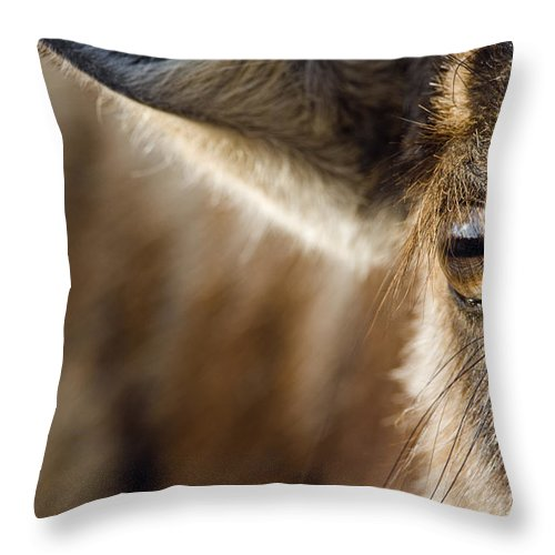 Fn Throw Pillow featuring the photograph Blue Wildebeest Connochaetes Taurinus by Vincent Grafhorst