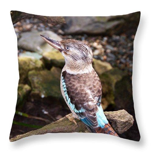 Kookaburra Throw Pillow featuring the photograph Blue-winged Kookaburra 2 by Bob and Nancy Kendrick