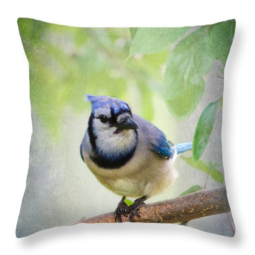 Bluejay Throw Pillow featuring the photograph Bluejay In A Tree by Betty LaRue