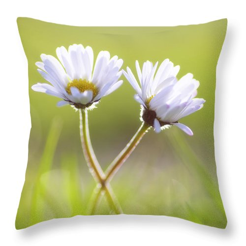 Gaenseblume Throw Pillow featuring the photograph Blumen Liebe by Tanja Riedel