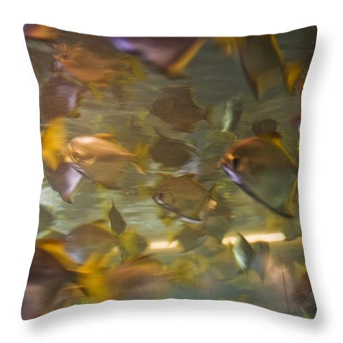 Fish Throw Pillow featuring the photograph Blurred Image Of Fish Swimming In An by Todd Gipstein