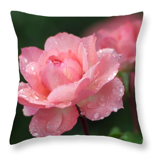 Roses Throw Pillow featuring the photograph Blush by Living Color Photography Lorraine Lynch