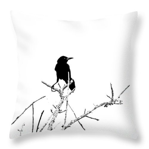 Boattail Throw Pillow featuring the digital art Boattail Grackle by Lizi Beard-Ward