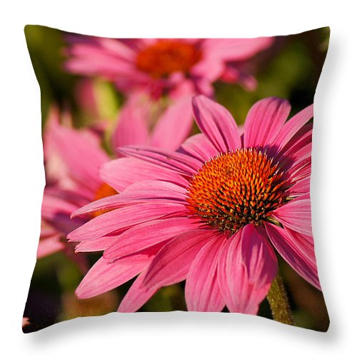 Flower Throw Pillow featuring the photograph Bold And Beautiful by Bill Pevlor
