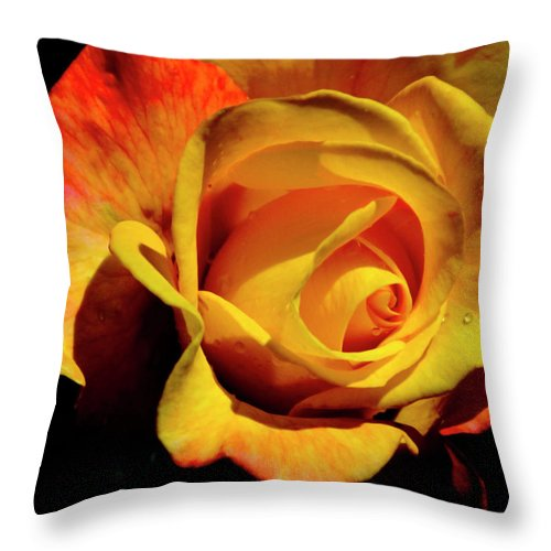 Rose Throw Pillow featuring the photograph Bold Rose 2 by Francesa Miller