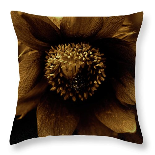 Rural Throw Pillow featuring the photograph Borange by The Artist Project