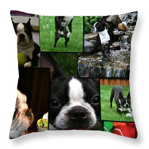 Animal Throw Pillow featuring the photograph Boston Terrier Photo Collage by Susan Herber