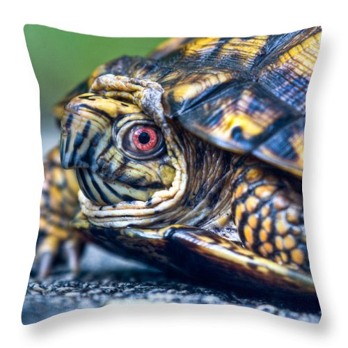 Box Throw Pillow featuring the photograph Box Turtle 2 by Douglas Barnett