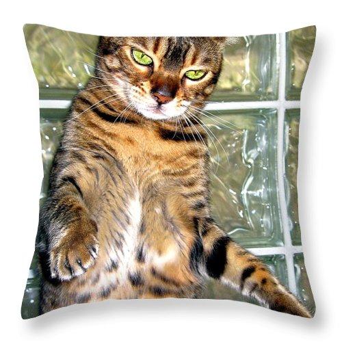 Bengal Cat Throw Pillow featuring the photograph Boxing Bengal Cat by Phyllis Kaltenbach
