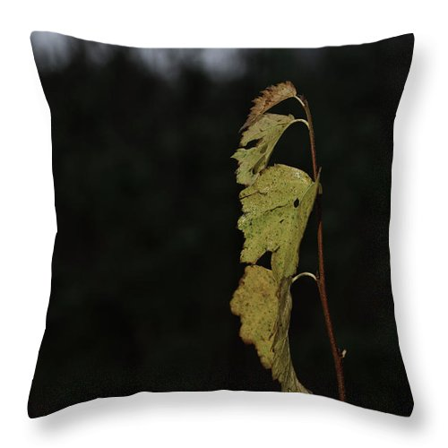 Autumn Throw Pillow featuring the photograph Branch Of Maple by Michael Goyberg