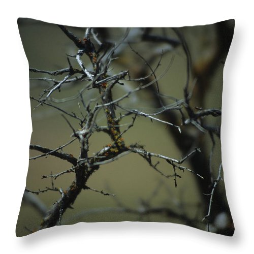 Branches Throw Pillow featuring the photograph Branches by One Rude Dawg Orcutt