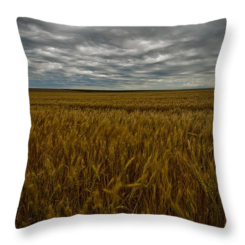 Wheat Throw Pillow featuring the photograph Brewing Storm by Dan Mihai