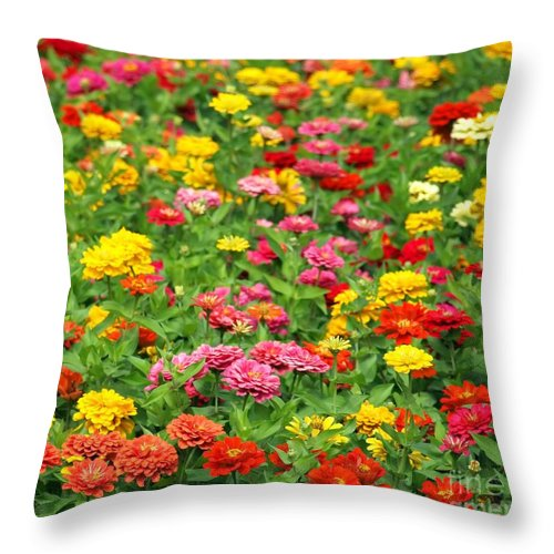 Marigold Throw Pillow featuring the photograph Brightly Colored Marigold Flowers by Yali Shi