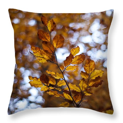 Autumn Throw Pillow featuring the photograph Brilliant Leaves by Mike Reid