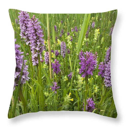 Nis Throw Pillow featuring the photograph Broad-leaved Marsh Orchid Dactylorhiza by Jan Vink