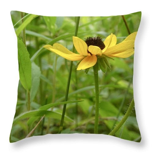 Brown Eyed Susan Throw Pillow featuring the photograph Brown Eyed Susan by Angie Rea