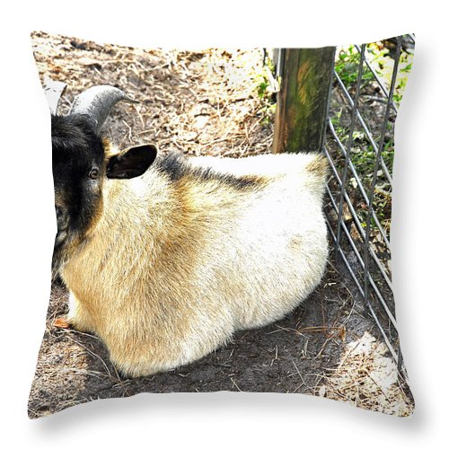 Mammal Throw Pillow featuring the photograph Brown Goat by G Adam Orosco