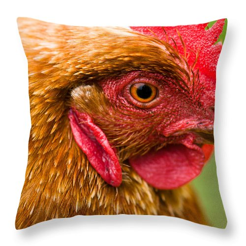 Animal Throw Pillow featuring the photograph Brown Head Of A Hen On A Lawn by U Schade