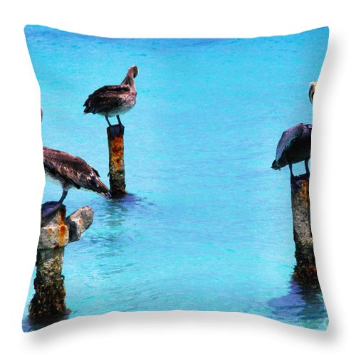 Brown Pelicans Throw Pillow featuring the photograph Brown Pelicans In Aruba by Thomas R Fletcher