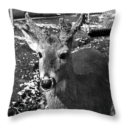 Brushy Mountain State Penitentiary Throw Pillow featuring the photograph Brushy Mountain 3 by Paul Mashburn