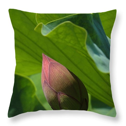 Nature Throw Pillow featuring the photograph Bud Watched Over Dl050 by Gerry Gantt