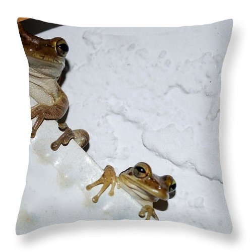 Frog Throw Pillow featuring the photograph Buddies by Charles Bacon Jr