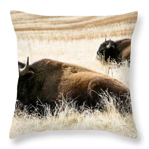 Utah Throw Pillow featuring the photograph Buff And Friend 2 by Marilyn Hunt