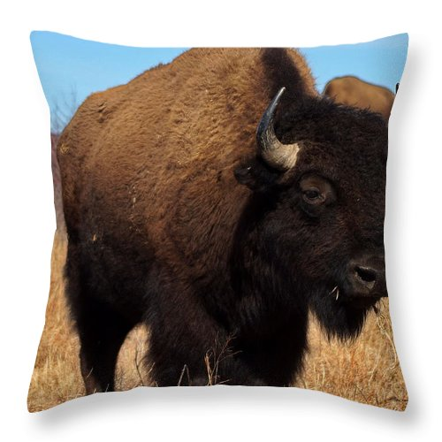 Buffalo Throw Pillow featuring the photograph Buffalo by Alan Hutchins