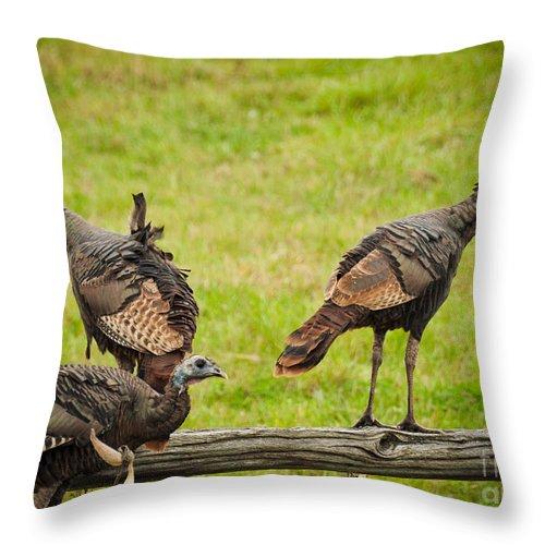 Turkeys Throw Pillow featuring the photograph Bunch Of Turkeys by Cheryl Baxter