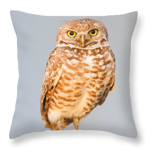 Clarence Holmes Throw Pillow featuring the photograph Burrowing Owl V by Clarence Holmes
