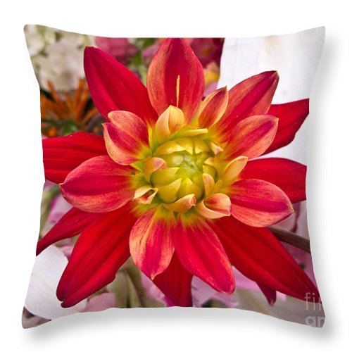 Floral Throw Pillow featuring the photograph Burst Of Color by Arlene Carmel