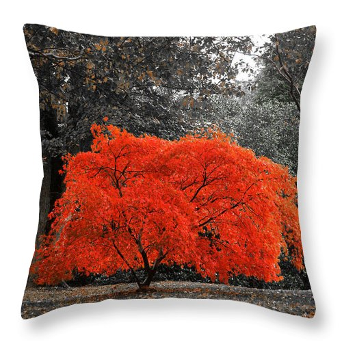 Autumn Throw Pillow featuring the photograph Bush On Fire by David Resnikoff