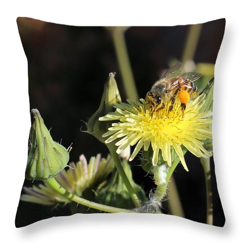 Floral Throw Pillow featuring the photograph Busy Bee by Kume Bryant