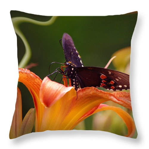 Nspirational Throw Pillow featuring the photograph Butterflies Are Free... by Arthur Miller