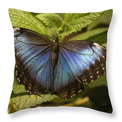 Throw Pillow featuring the photograph Butterfly 3 by Craig Vargas