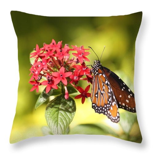Throw Pillow featuring the photograph Butterfly 4 by Craig Vargas