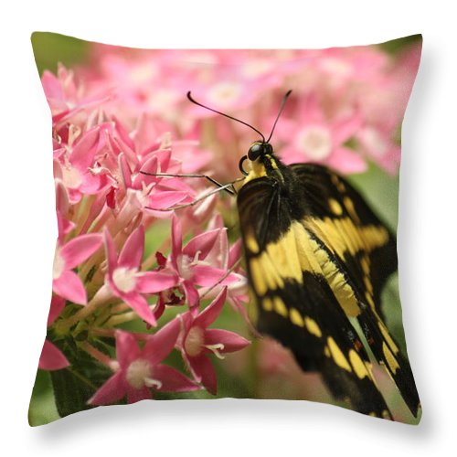 Throw Pillow featuring the photograph Butterfly 5 by Craig Vargas