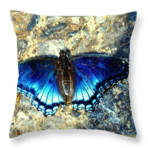 Butterfly Throw Pillow featuring the photograph Butterfly by Adriana Holmes