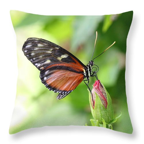 Butterfly Throw Pillow featuring the photograph Butterfly At Rest by Mark Heywood