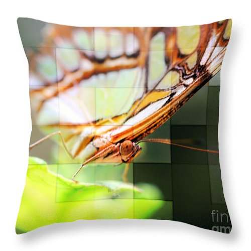 Butterfly Throw Pillow featuring the photograph Butterfly Frosted Glass by Smilin Eyes Treasures
