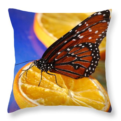 Butterfly Throw Pillow featuring the photograph Butterfly Nectar by Tam Ryan