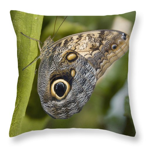 Black Throw Pillow featuring the photograph Butterfly On A Green Branch Niagara by Philippe Widling