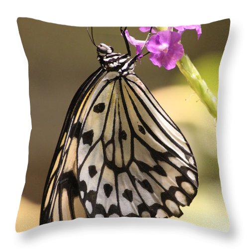 Throw Pillow featuring the photograph Butterfly On A Stem by Craig Vargas