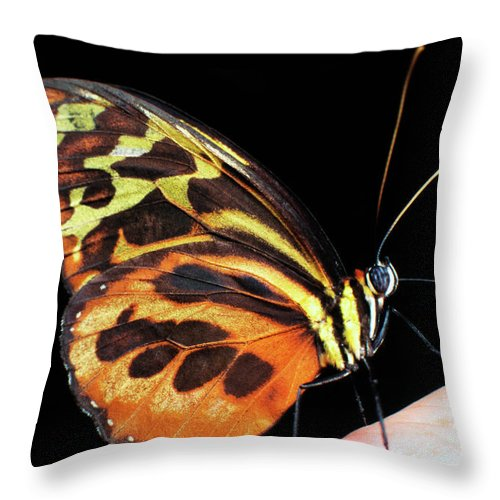 Butterfly On Finger Throw Pillow featuring the photograph Butterfly On Finger by Thomas R Fletcher