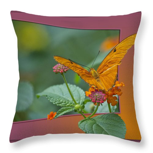 Test Throw Pillow featuring the photograph Butterfly Orange 16 By 20 by Thomas Woolworth