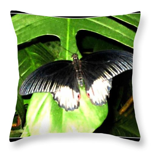 Wildlife Art Prints Throw Pillow featuring the photograph Butterfly Ready For Take Off by Danielle Parent