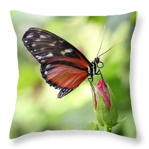 Butterfly Throw Pillow featuring the photograph Butterfly Resting by Mark Heywood
