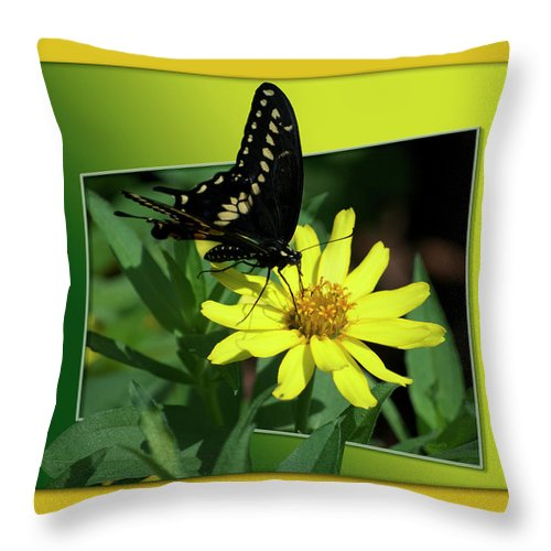 Test Throw Pillow featuring the photograph Butterfly Swallowtail 01 16 By 20 by Thomas Woolworth